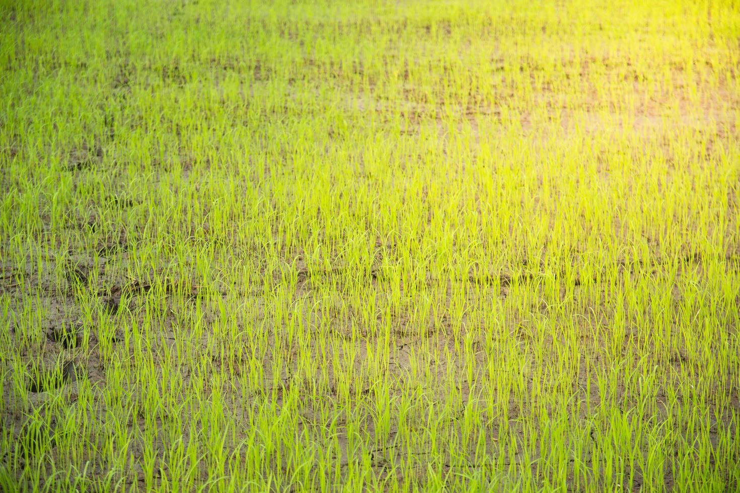 primer plano de un arroz presentado foto
