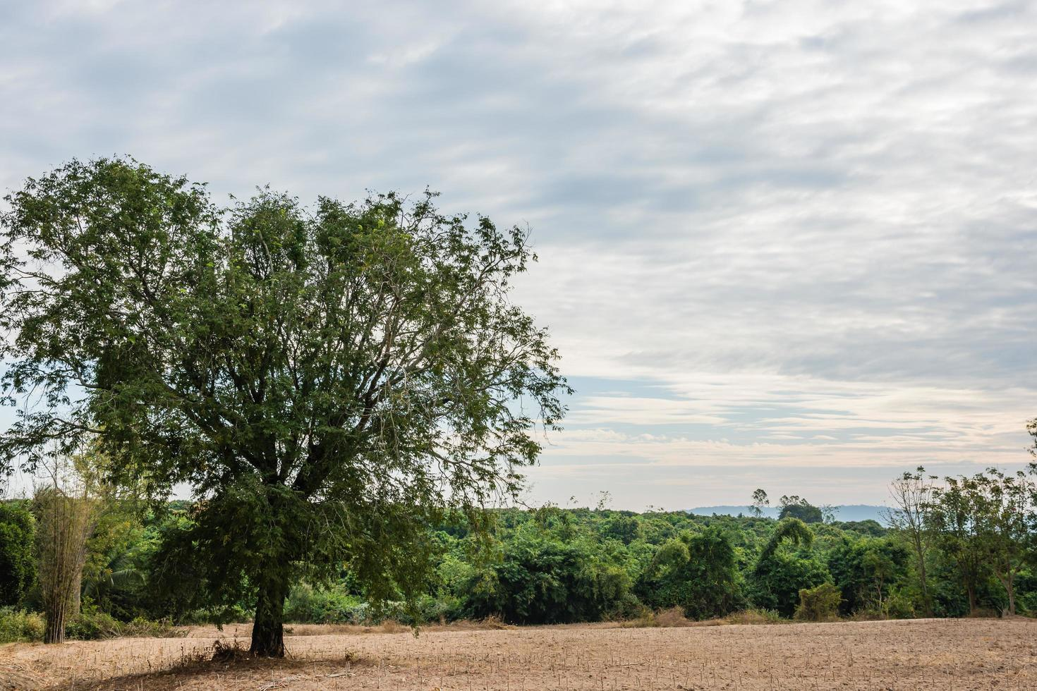 árbol en el campo foto