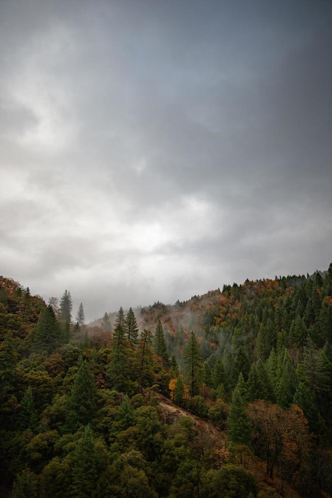 árboles bajo un cielo gris foto