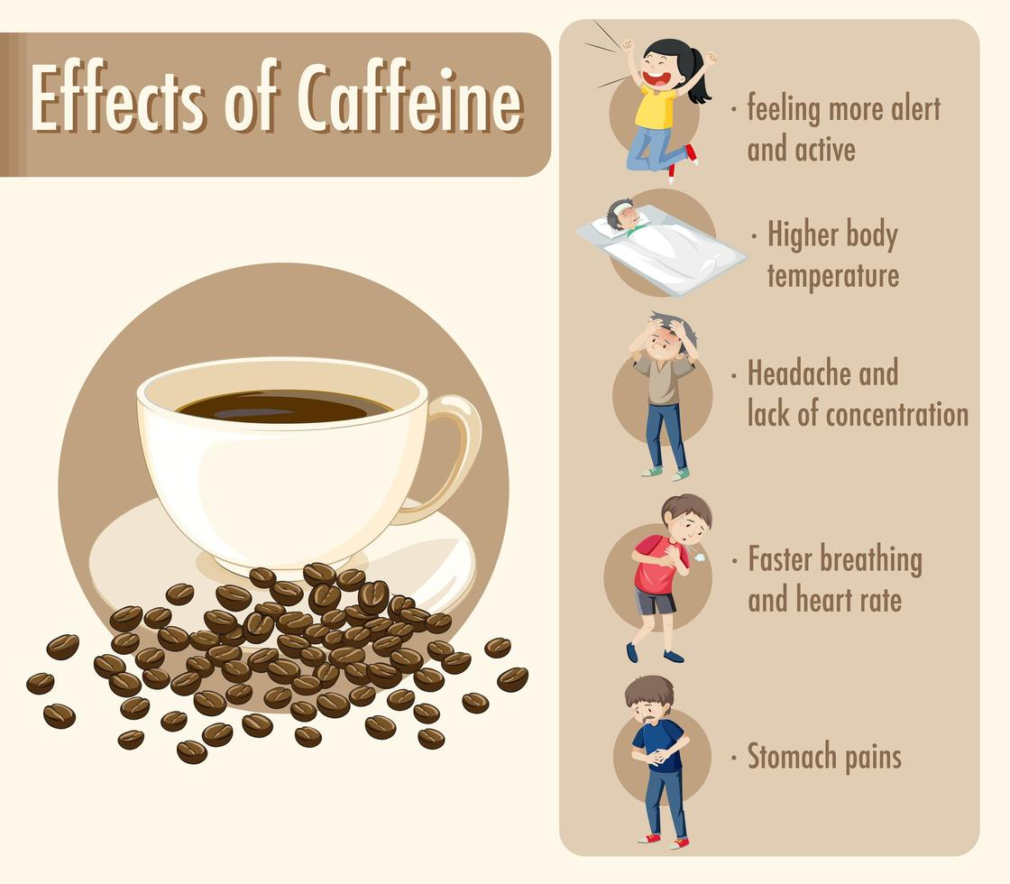 Effects of caffeine information infographic vector