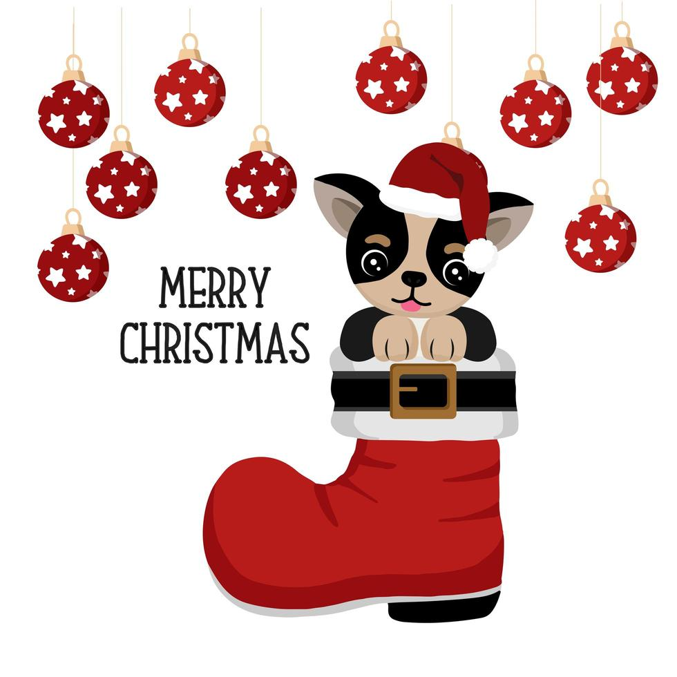 Cute chihuahua in Santa boot with Christmas ornaments vector