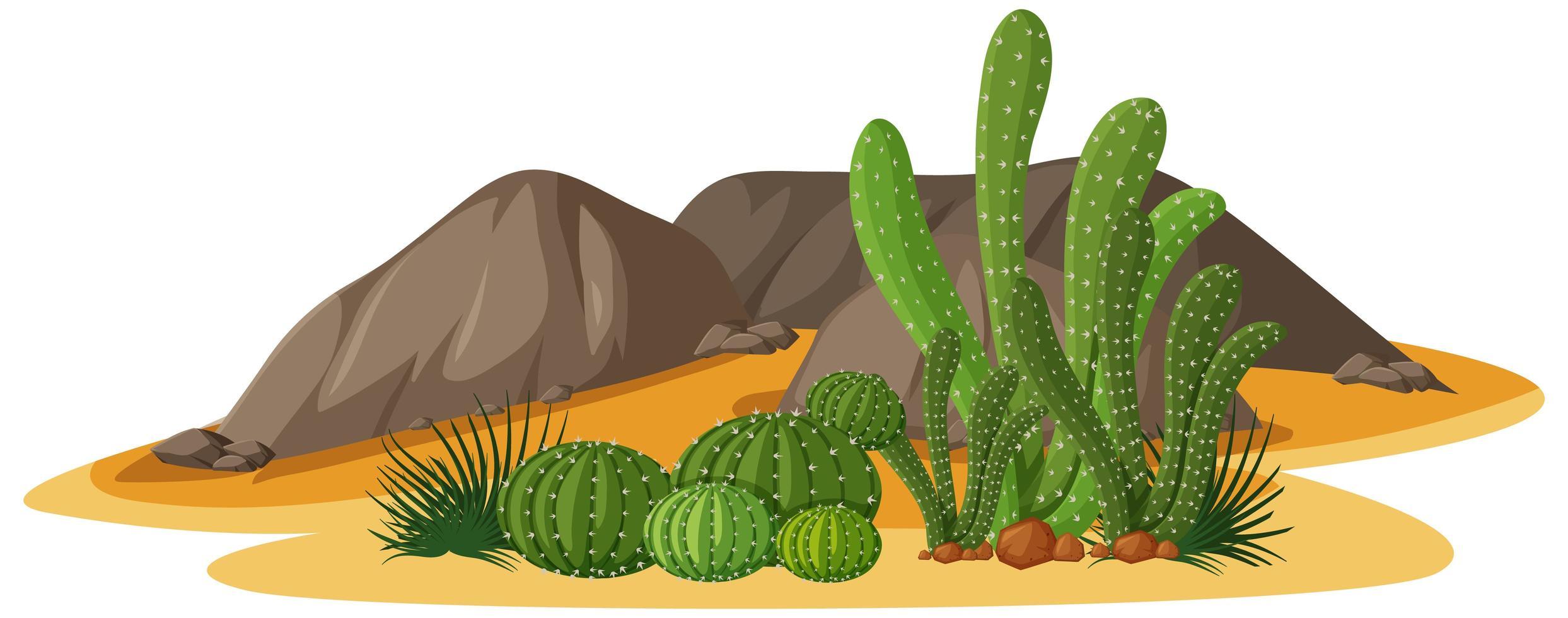 Diferentes formas de cactus en un grupo con elementos de rocas sobre fondo blanco. vector