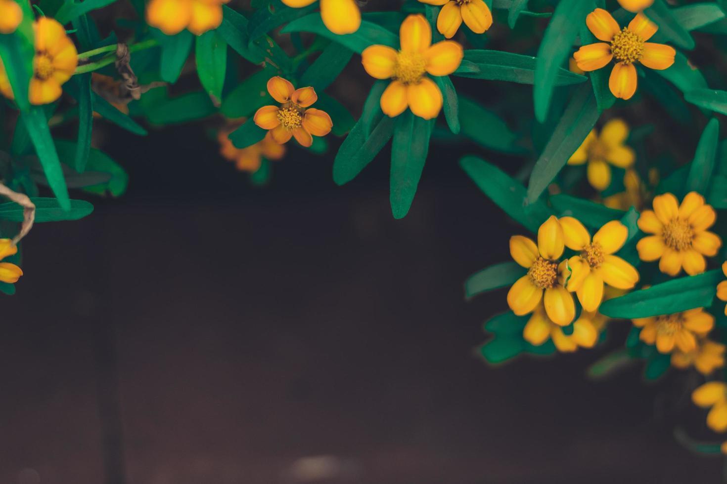 marco de primavera de verano de pequeñas flores amarillas foto
