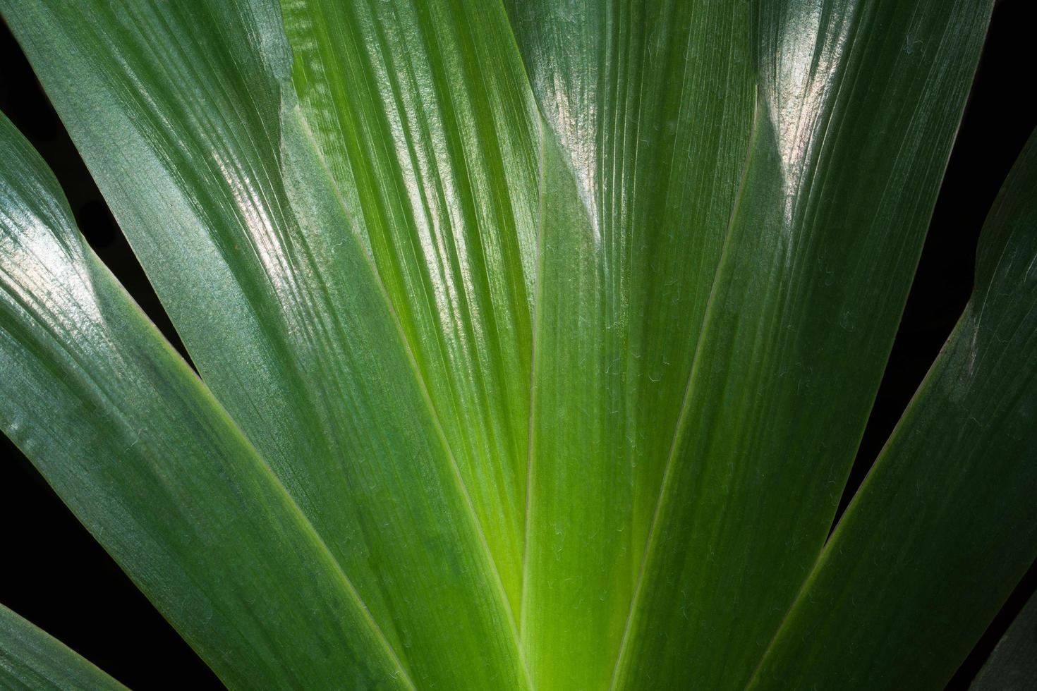 primer plano de la hoja verde foto