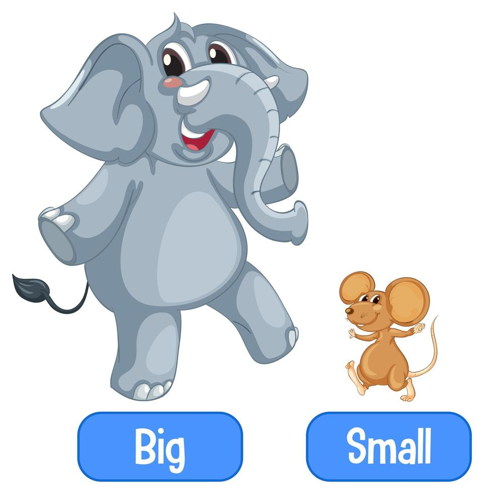 Opposite adjectives words with big and small vector
