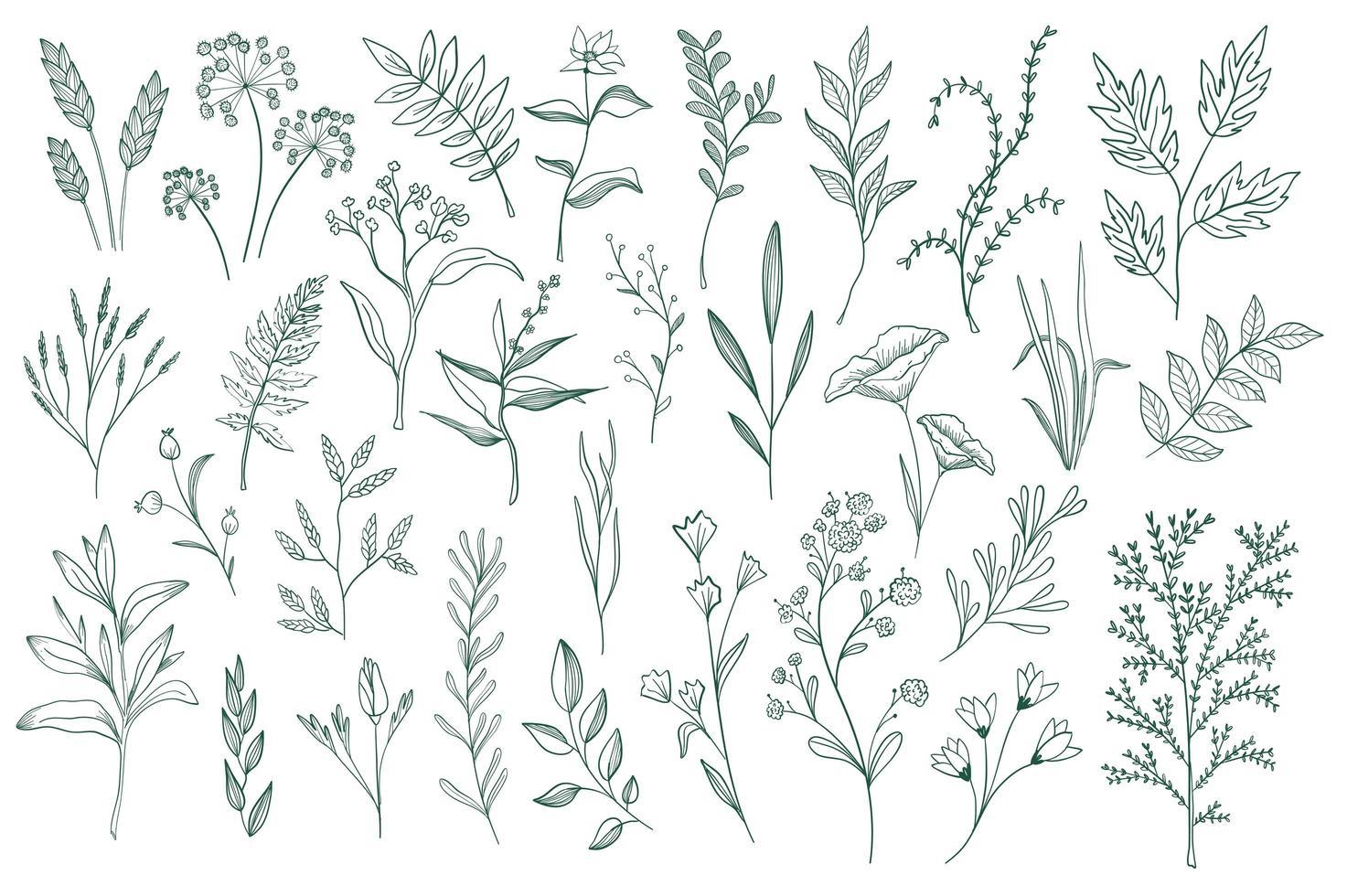 conjunto de elementos decorativos florales vector