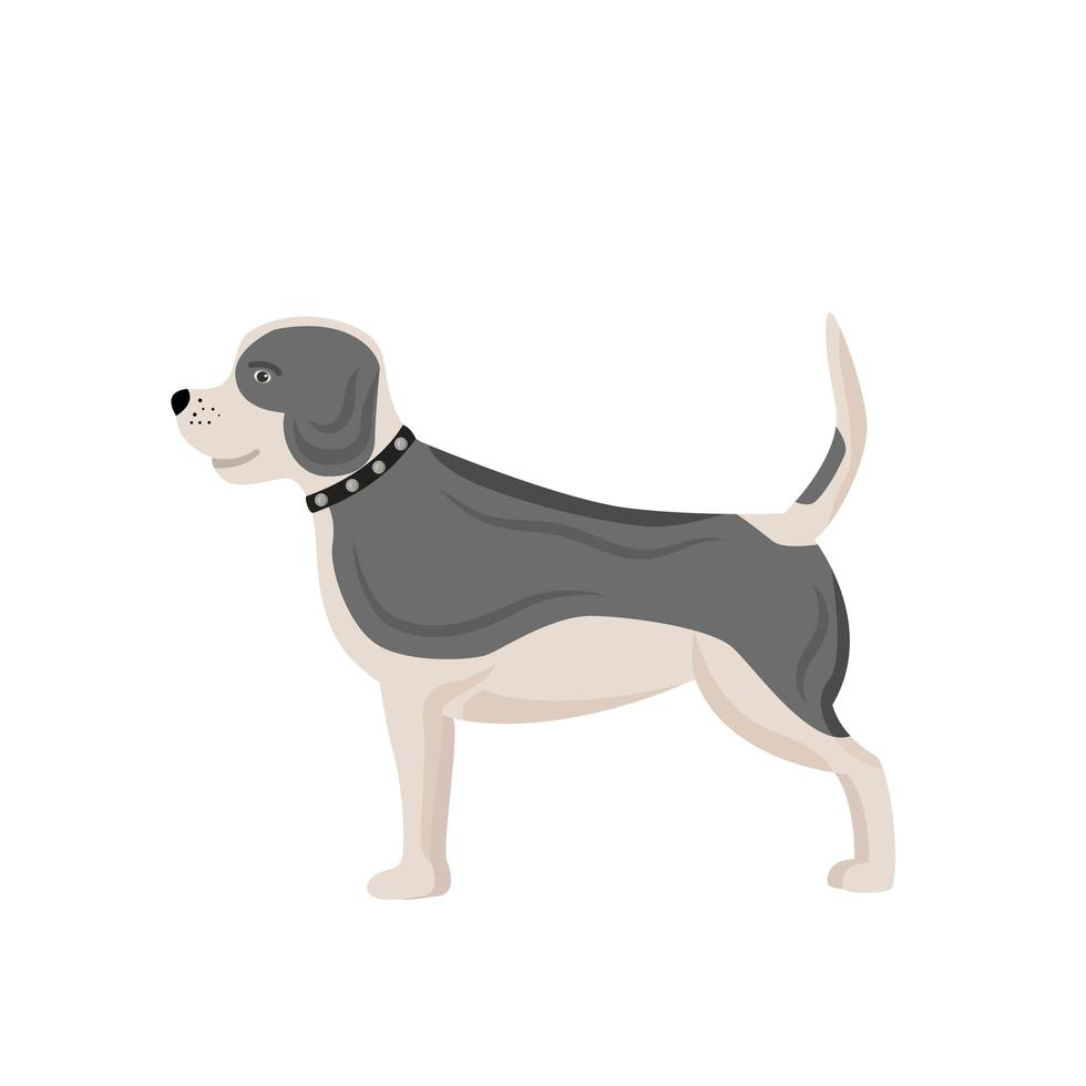 White and grey dog vector