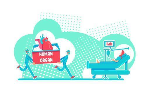cirugía de trasplante de órganos vector