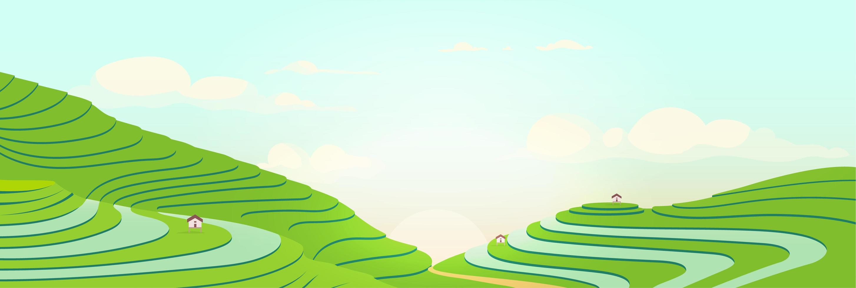 campos en terrazas al amanecer vector