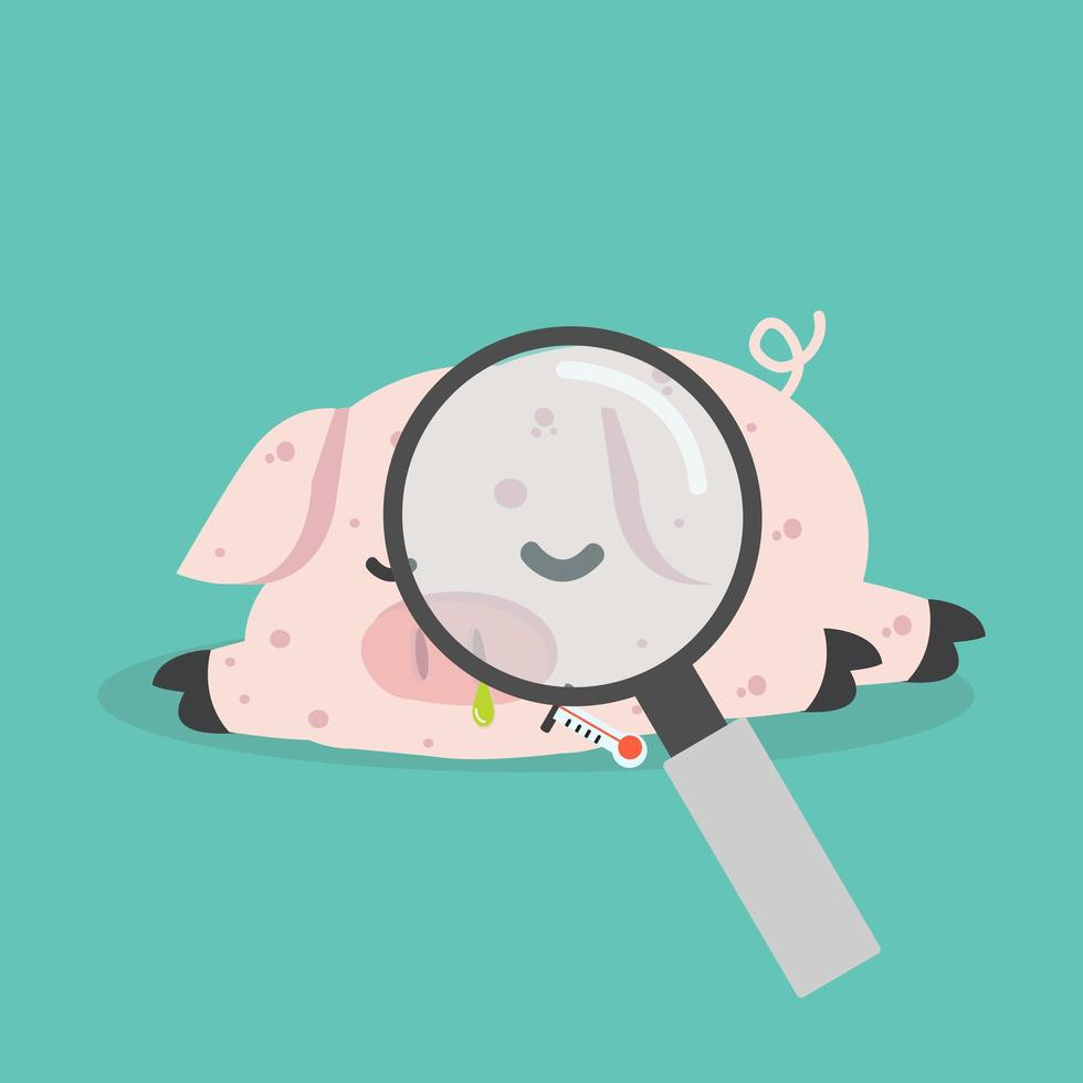 Sick Pig  Swine Flu with magnifying glass vector