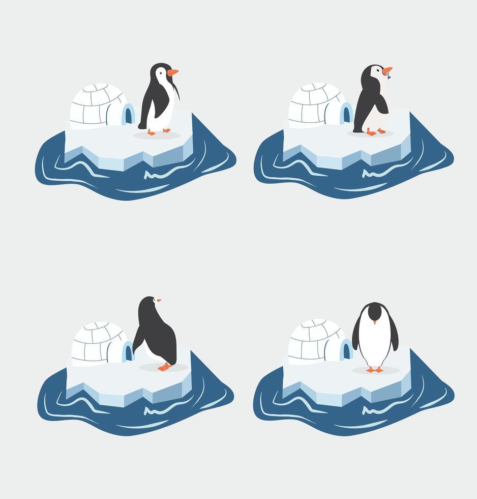 lindos pingüinos en un trozo de iceberg vector