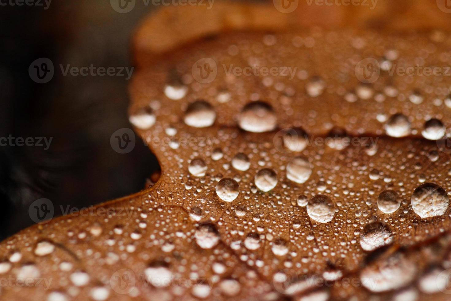 Fallen leaves covered with raindrops photo