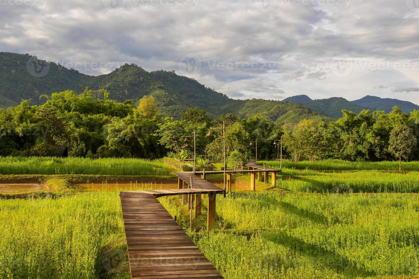 Wood path over rice field and through the mountain photo