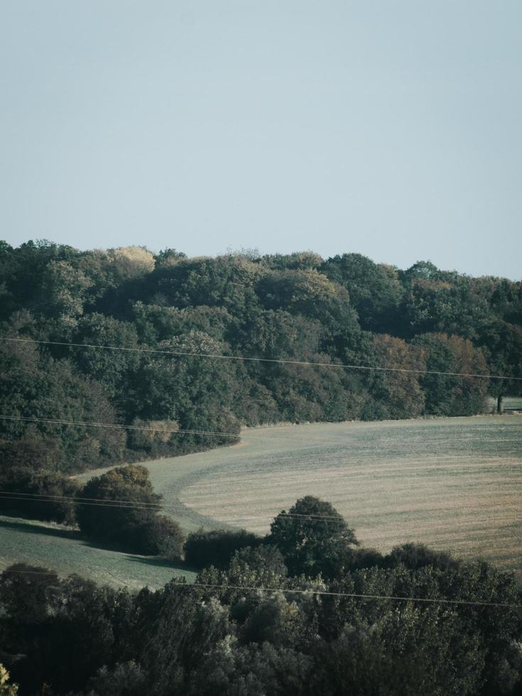 paisaje con bosque foto