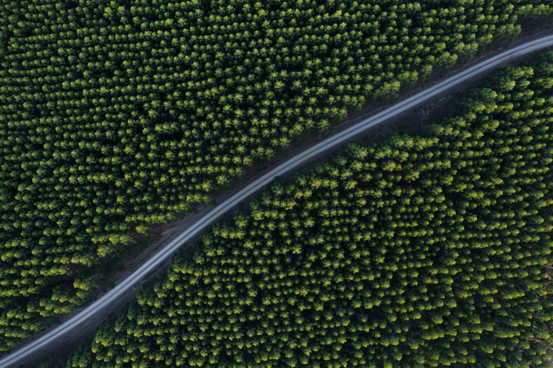 Foto aérea de la carretera de hormigón entre árboles