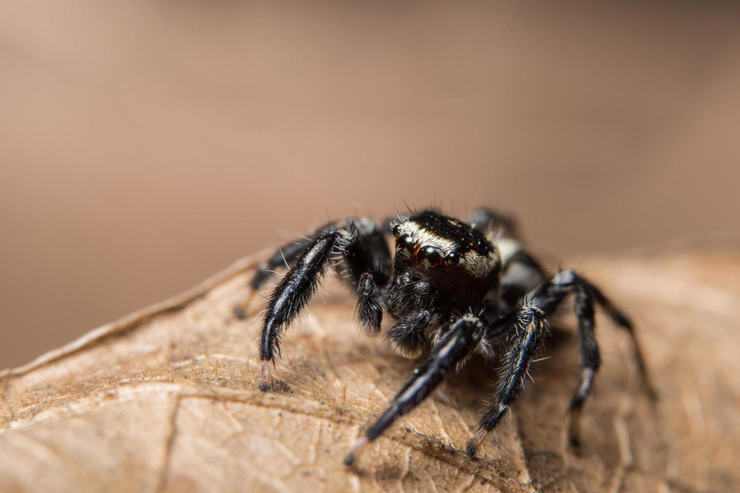 Spider on a leaf, close-up photo