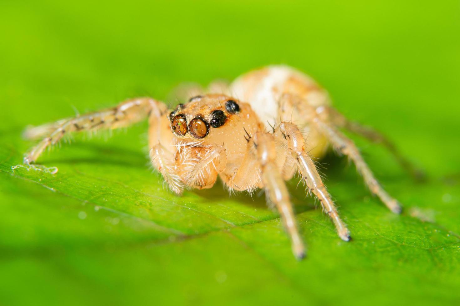 Spider on a green leaf photo