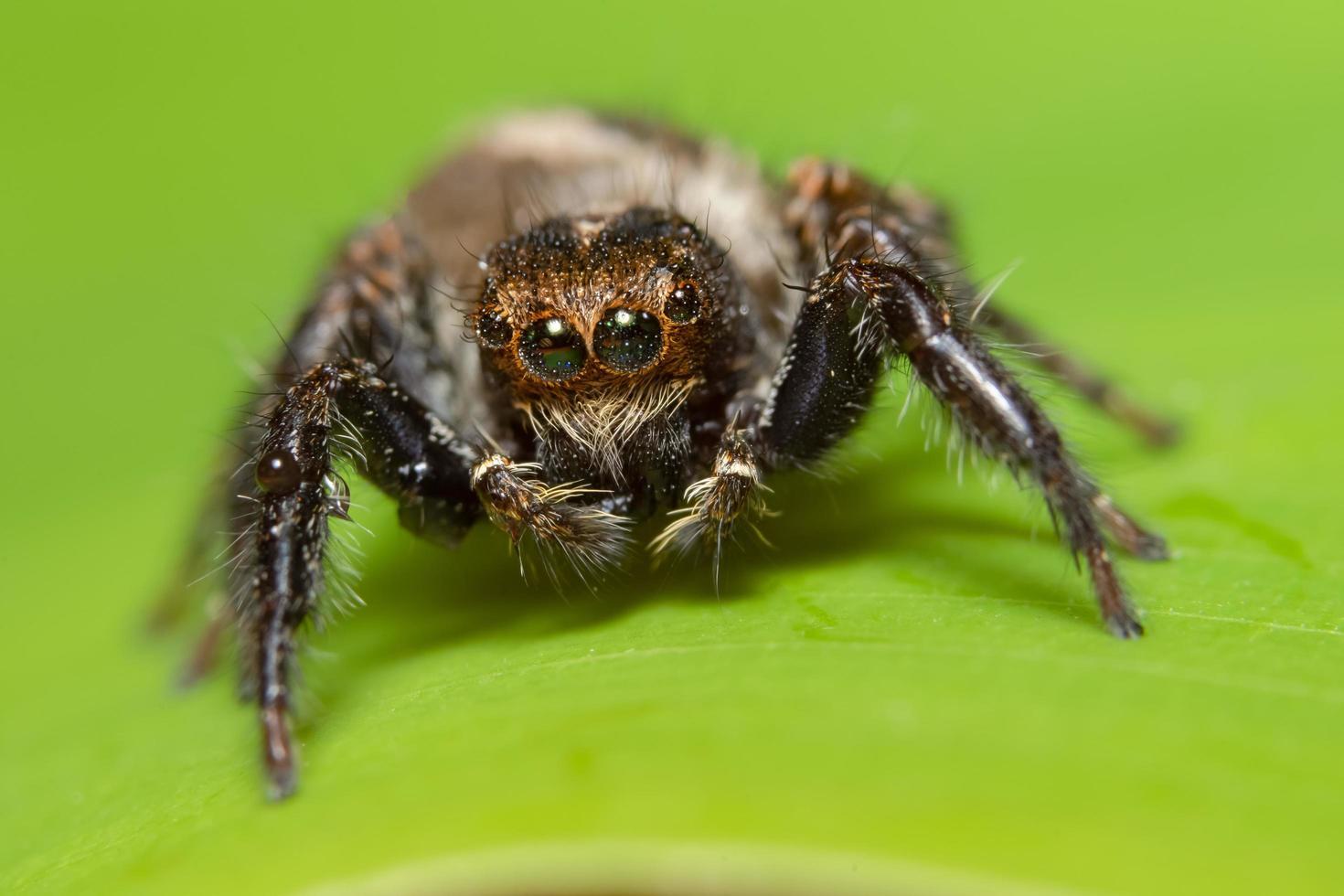 Araña macro sobre una hoja verde foto