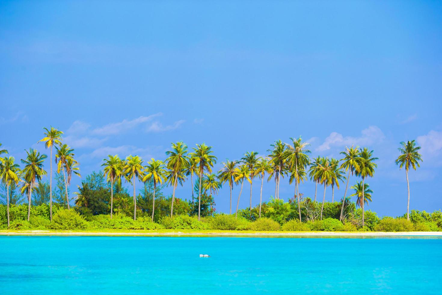 Tropical beach at daytime photo