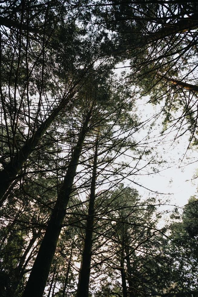 árboles verdes en un bosque foto