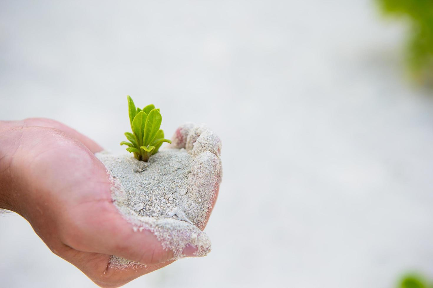 Hands holding green sapling in white sand photo
