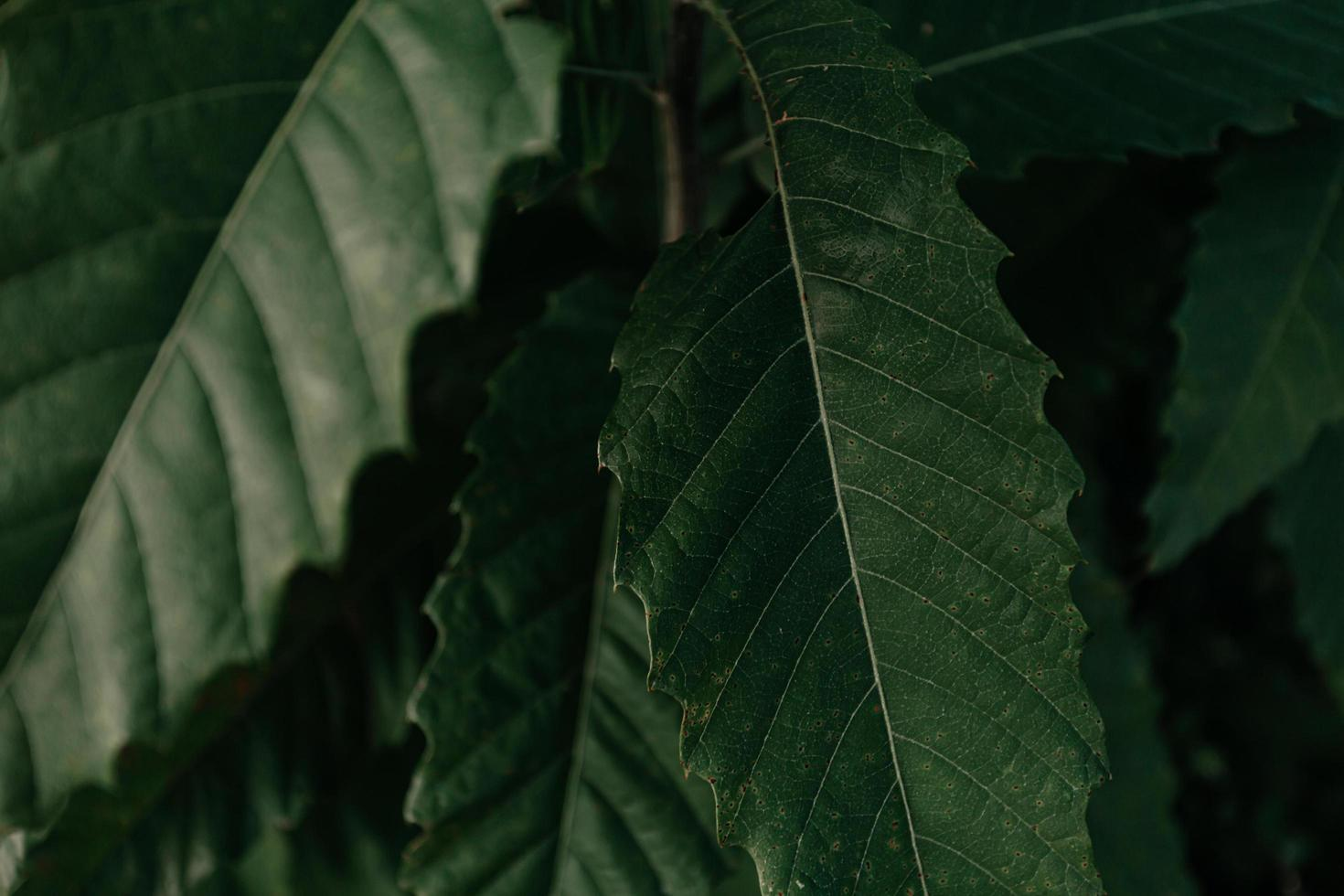 Close-up of leaves at night photo