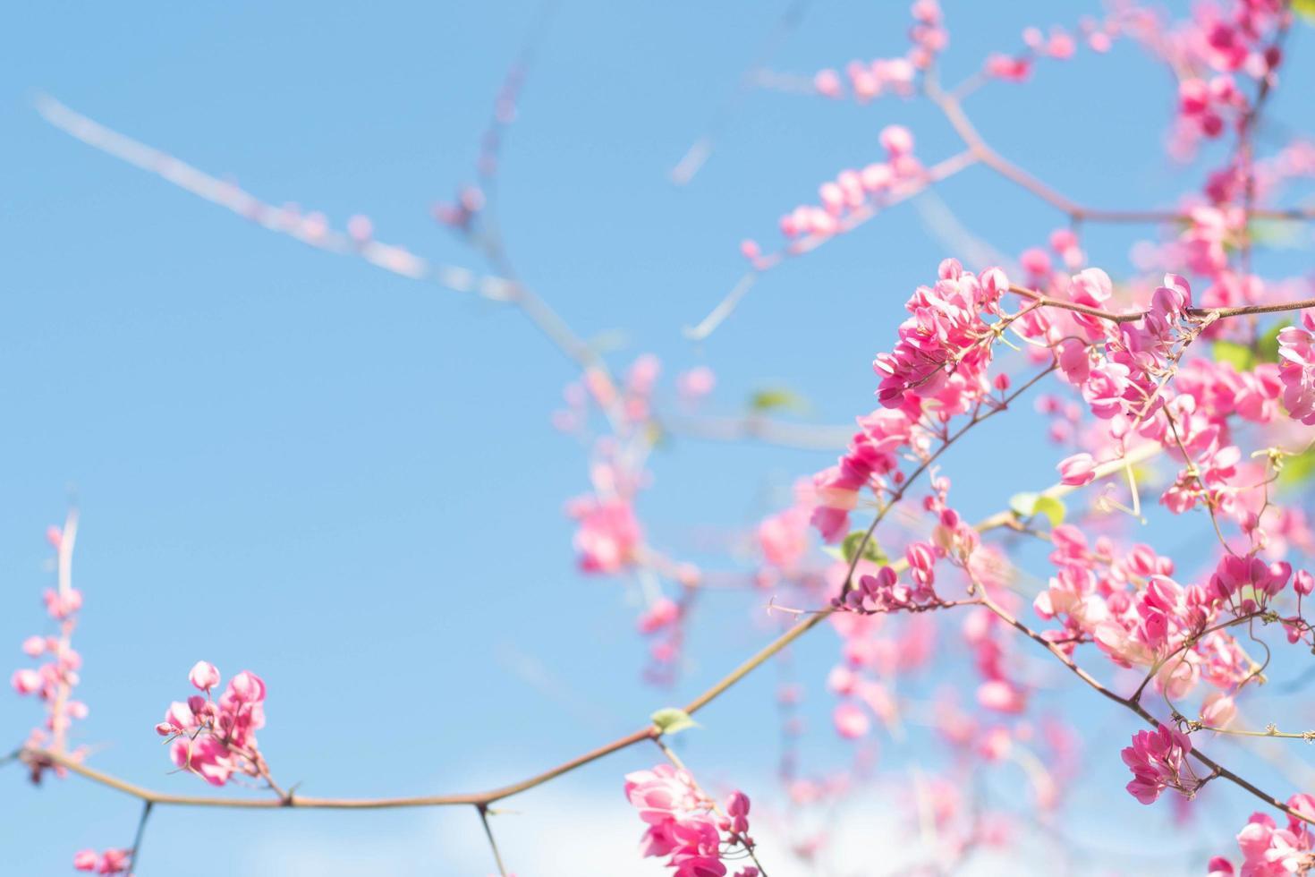 hermoso árbol de flor de cerezo brillante foto