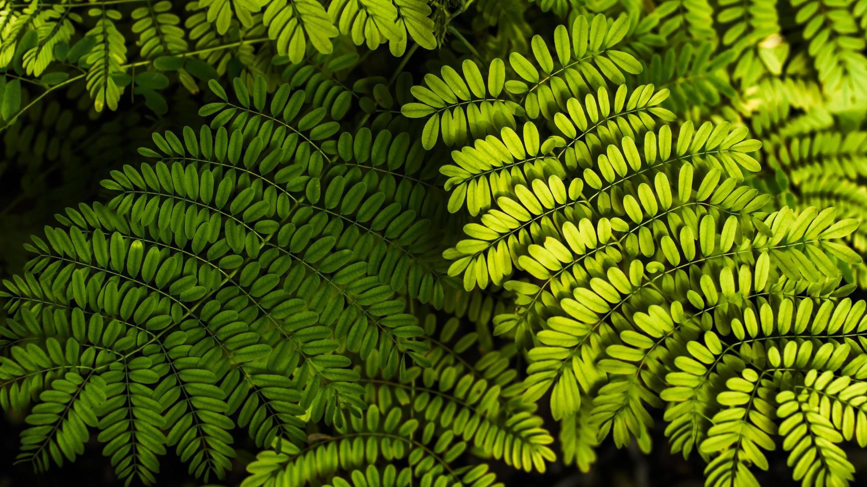 Soft focus fern leaf background photo