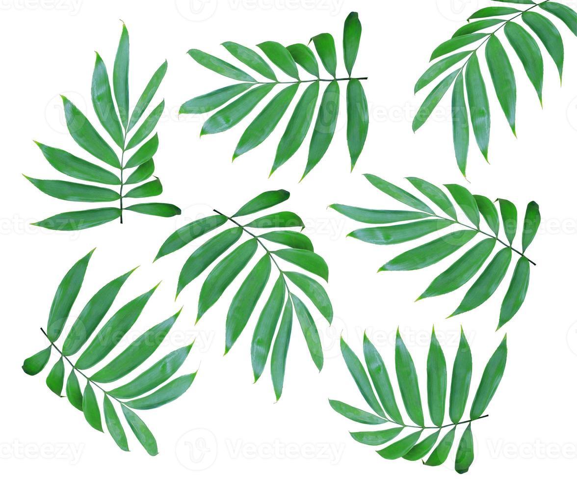 hojas aisladas sobre fondo blanco foto