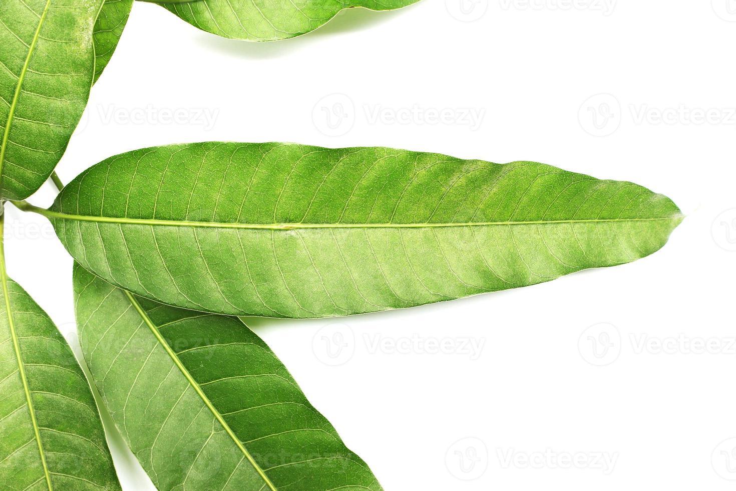 Leaves isolated on white background photo