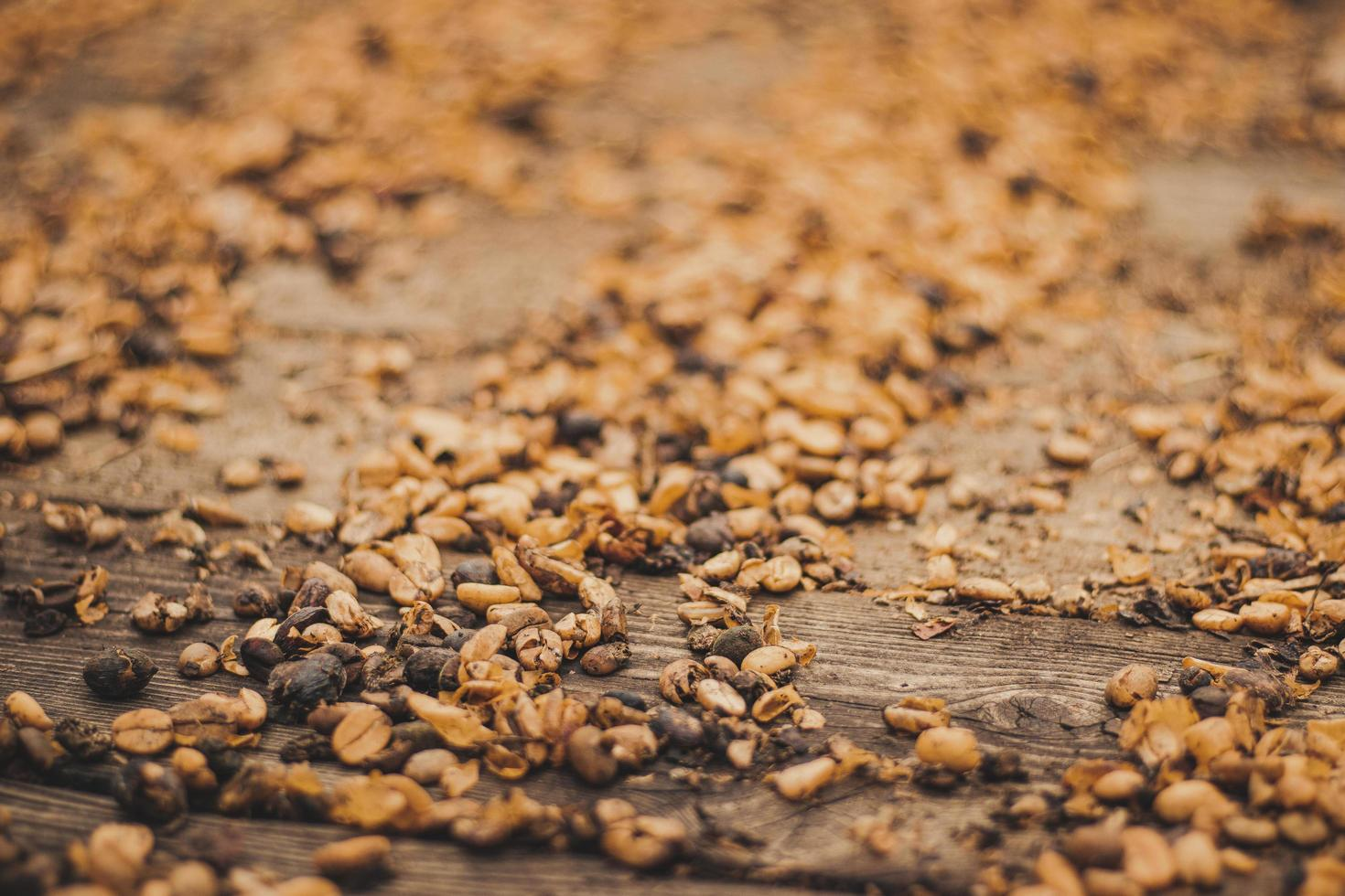 Close-up of dried coffee beans photo