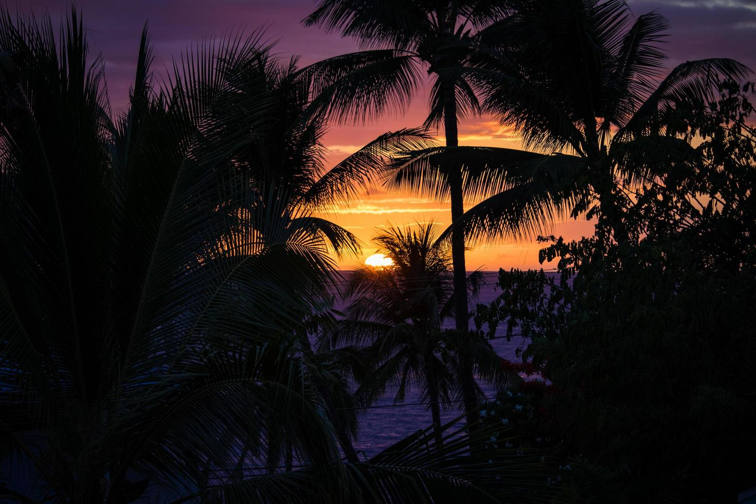 Silhouette of palm trees and a sunset photo