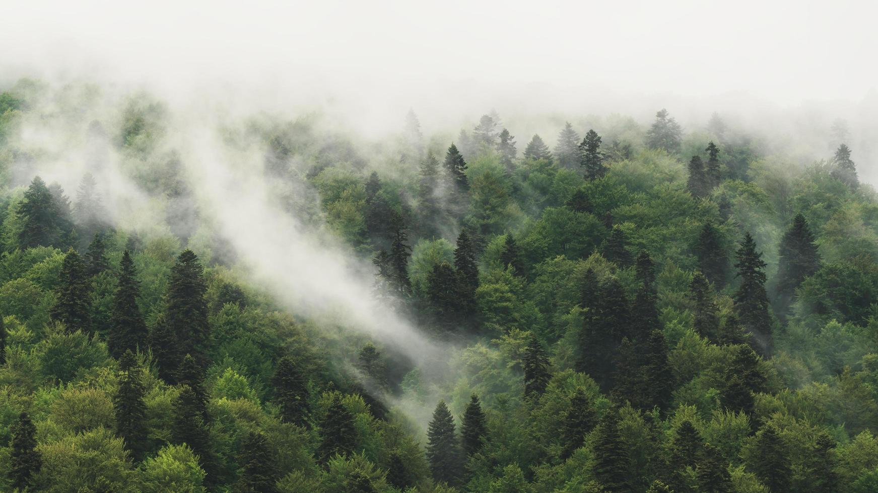 Forest covered in fog photo