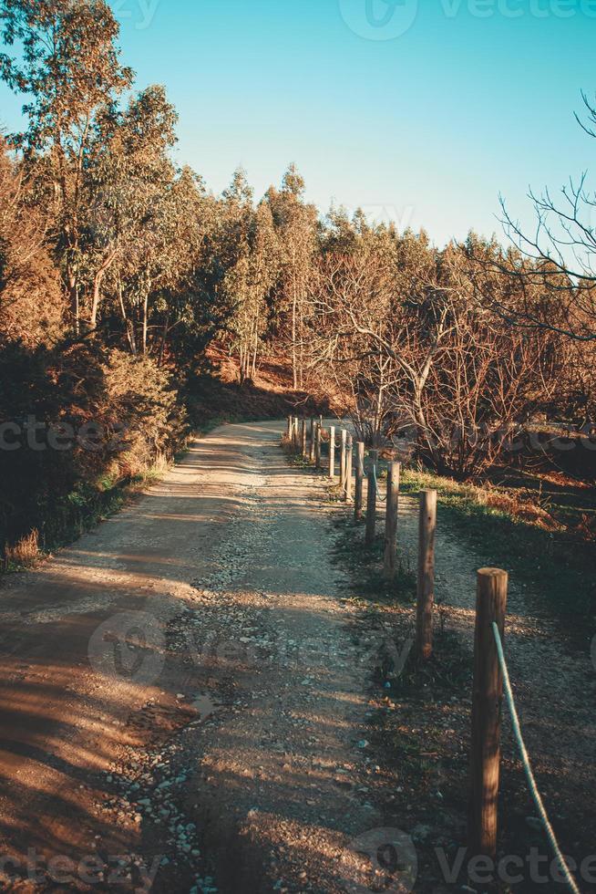 colorido camino a través del bosque durante un día soleado foto