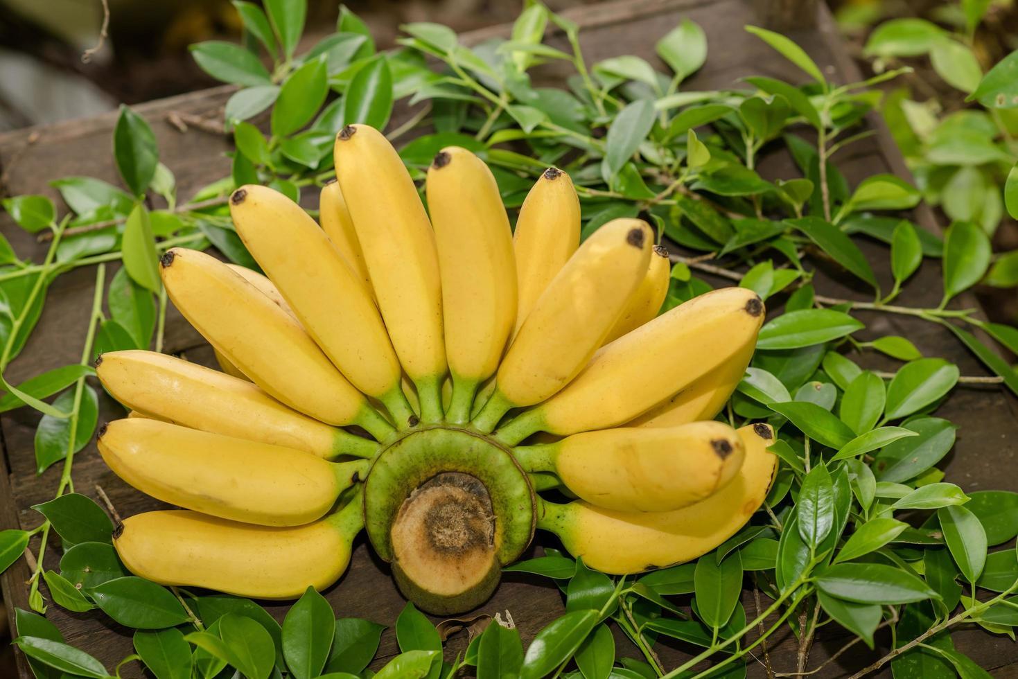 Fresh bananas on a table photo