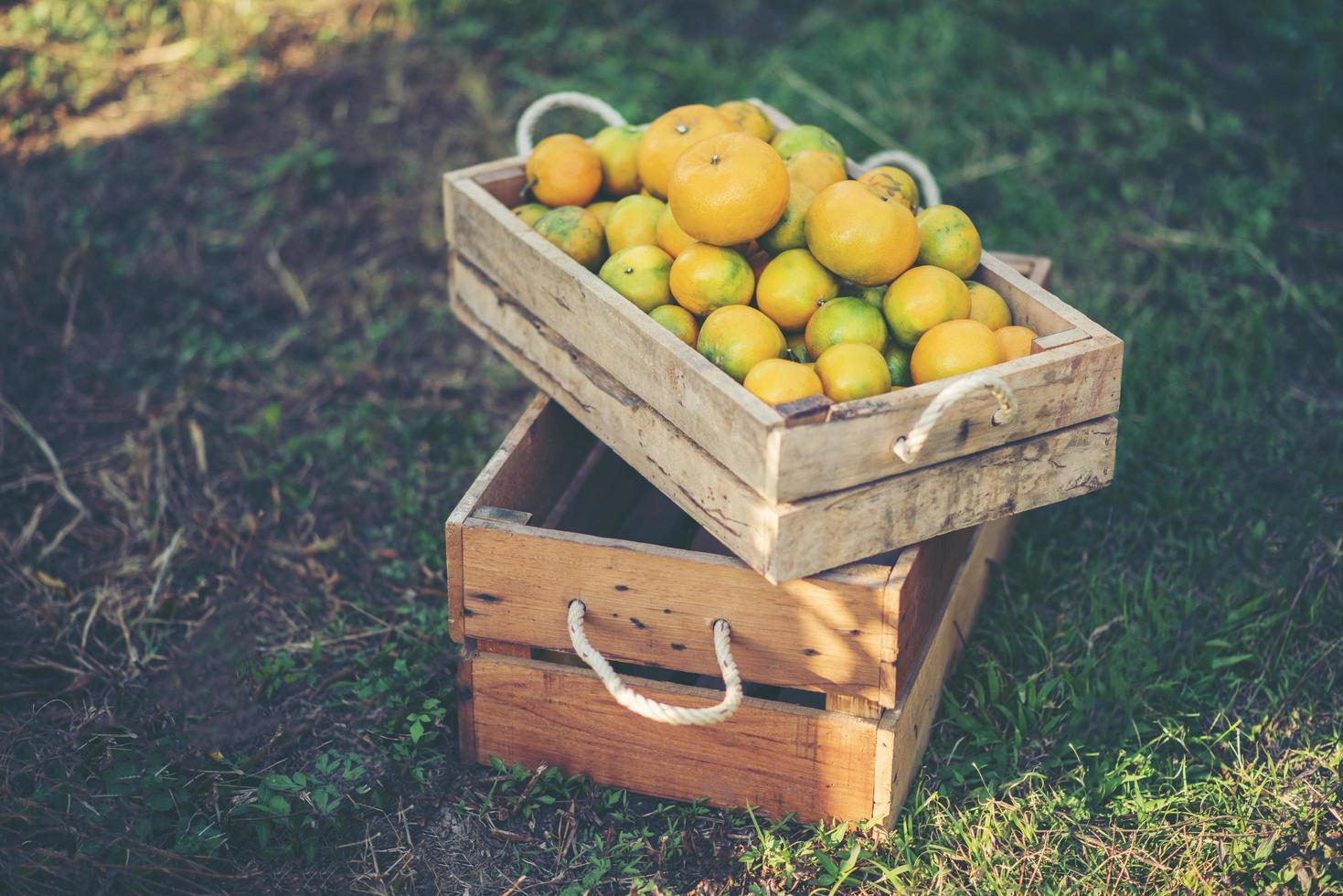 Fresh picked oranges photo