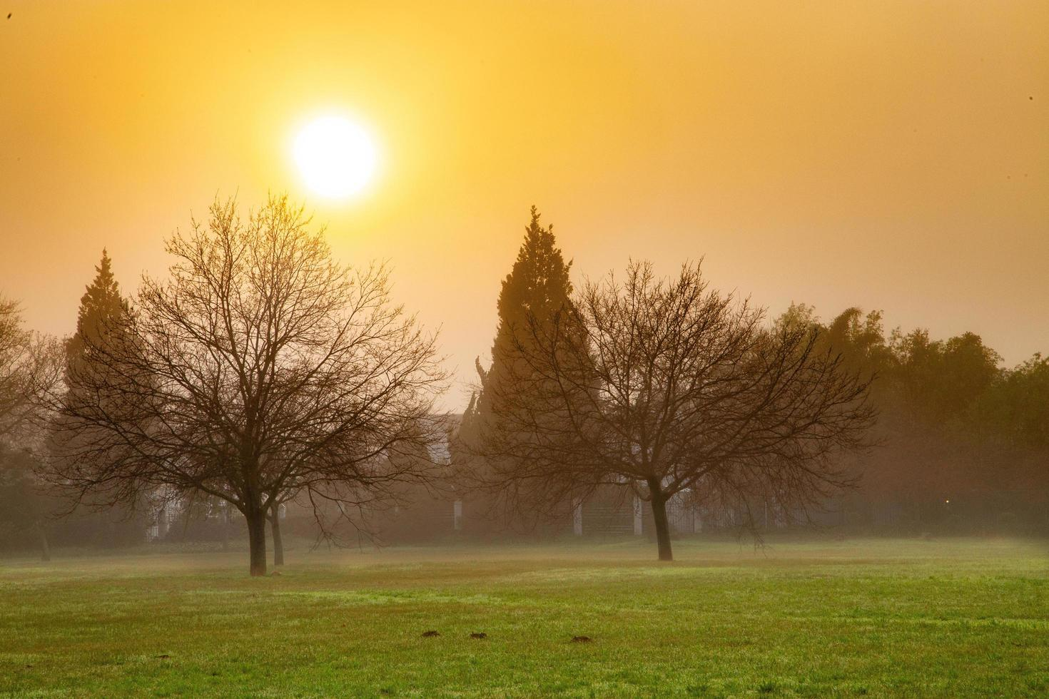 Foggy field at sunset photo