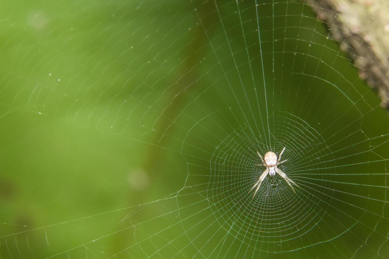 Spider in the spider web photo