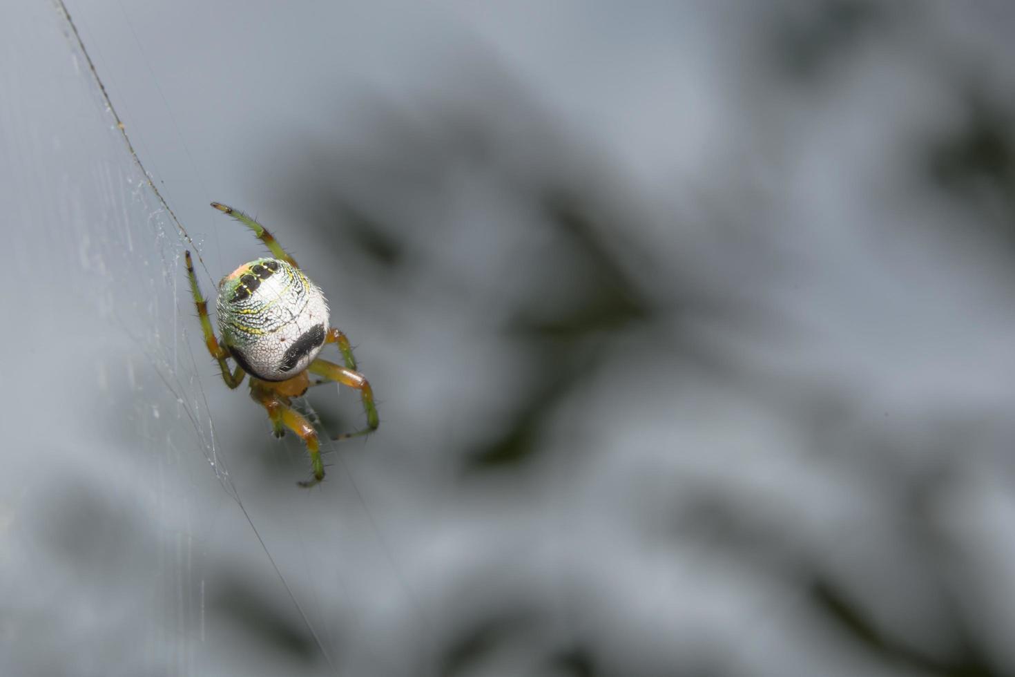 Spider, close-up photo