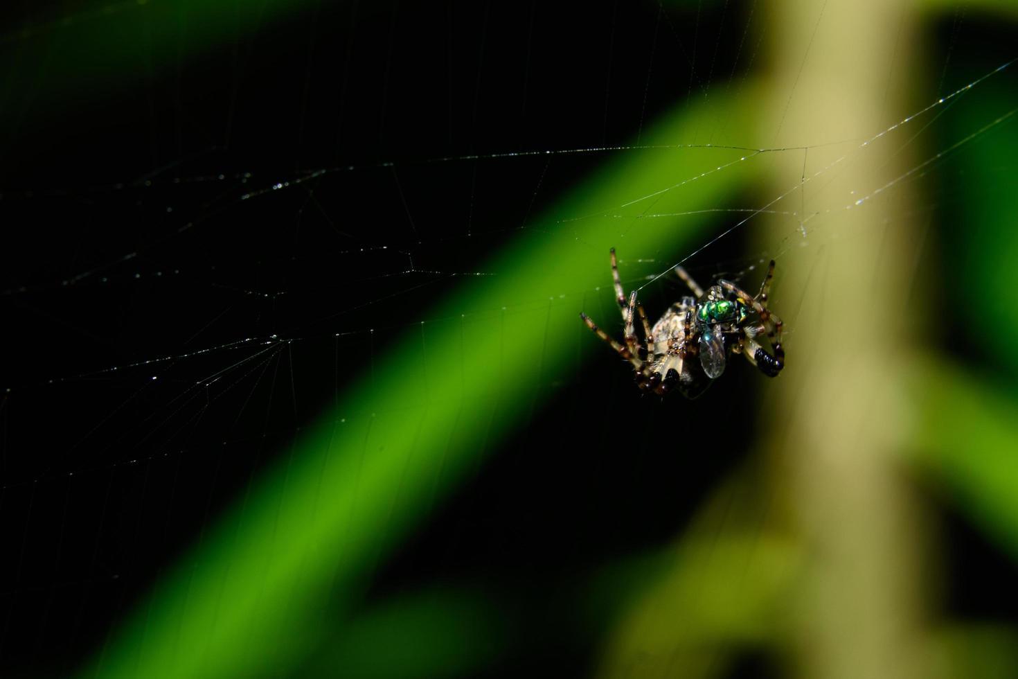 araña en la telaraña foto
