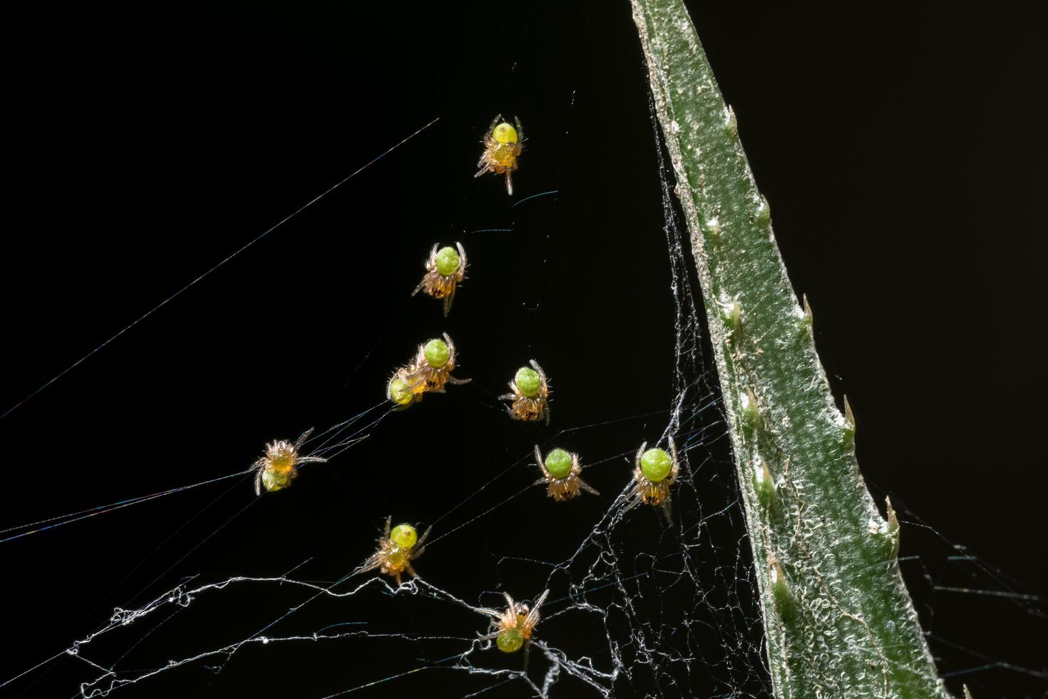 tomar una araña de cerca foto