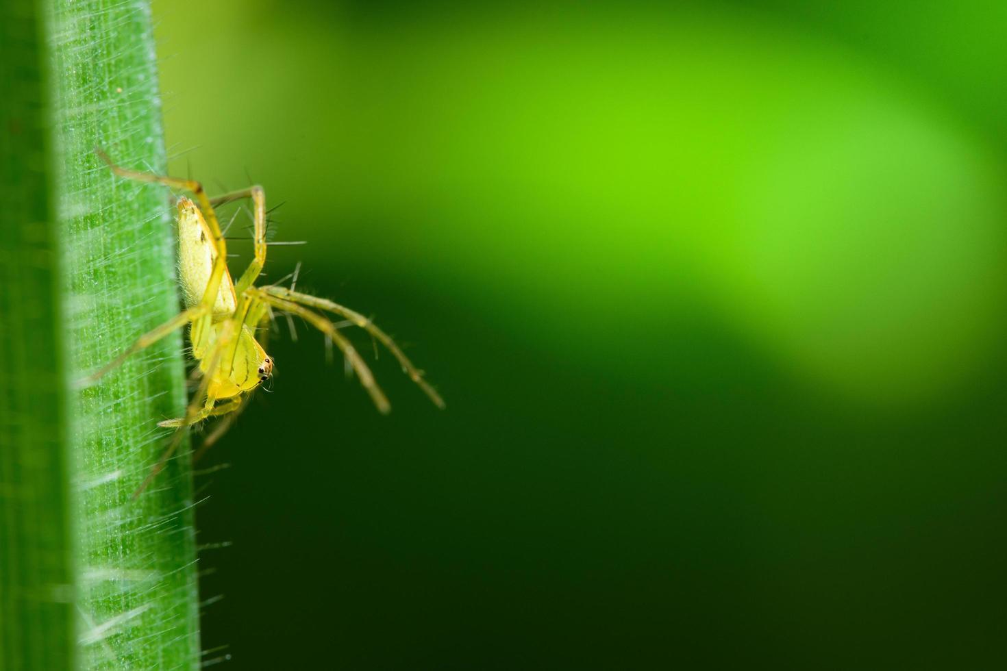 araña en una hoja foto