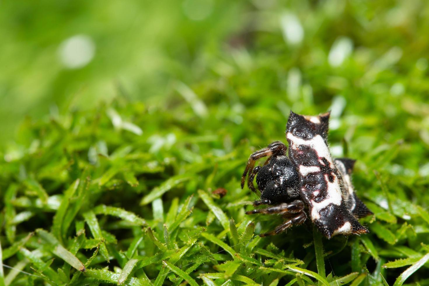 araña en la hierba foto