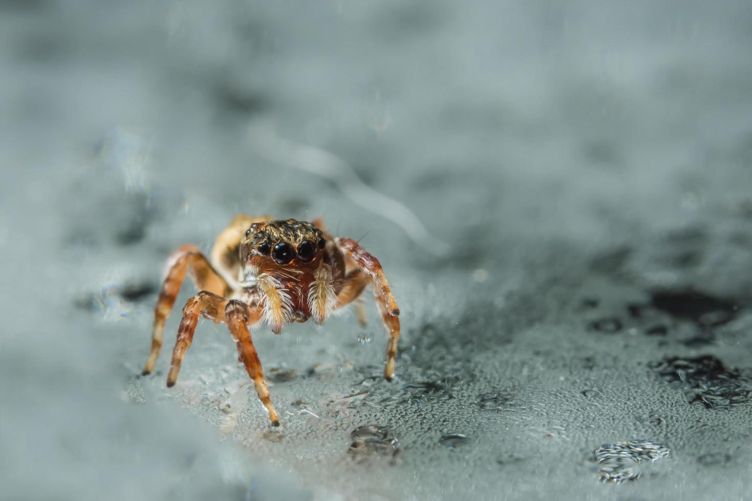 araña en la superficie del vidrio foto