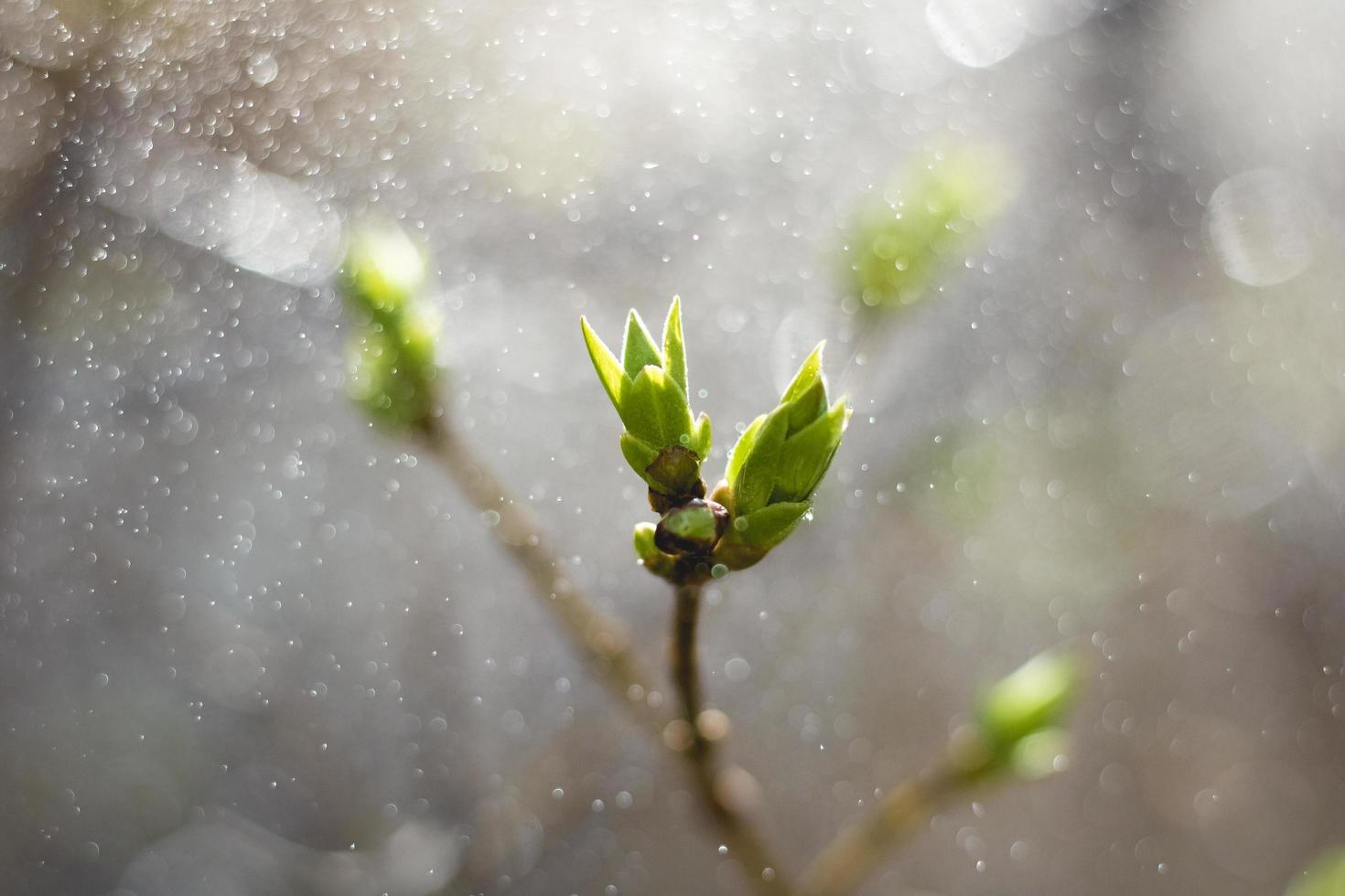hojas verdes en un árbol joven foto