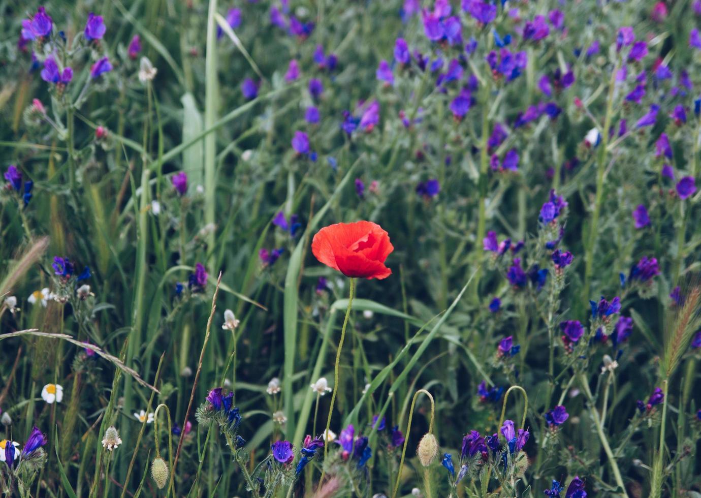 planta de flor roja foto