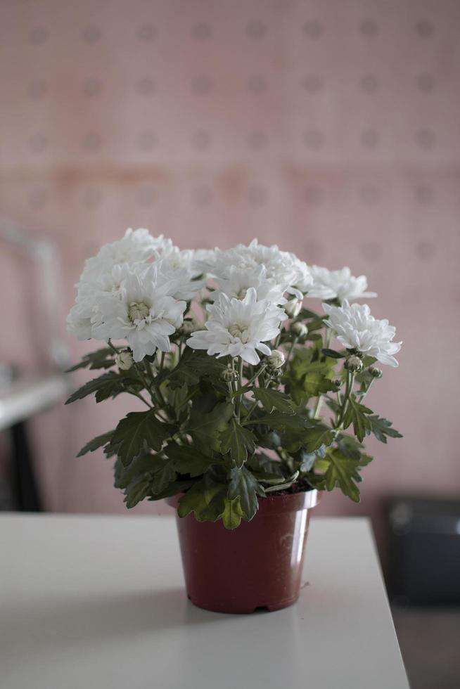 flores blancas en una maceta foto