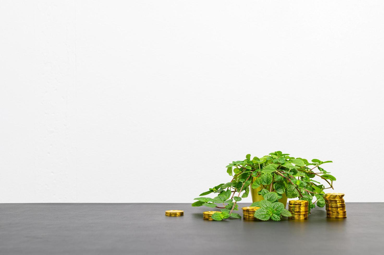 concepto de crecimiento financiero con monedas y una flor foto