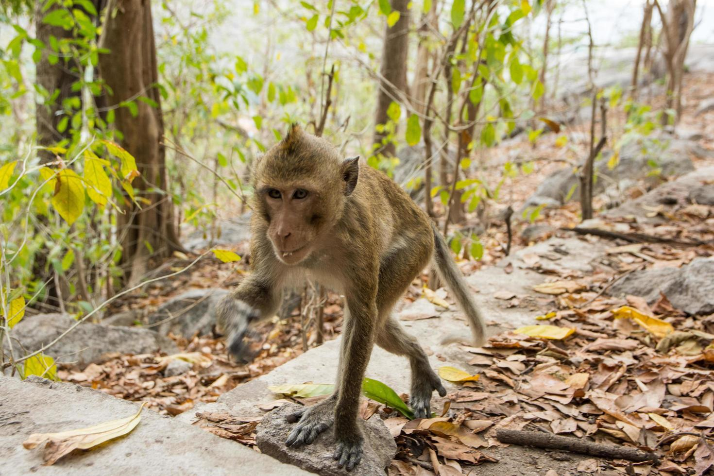 Monkey in the forest photo