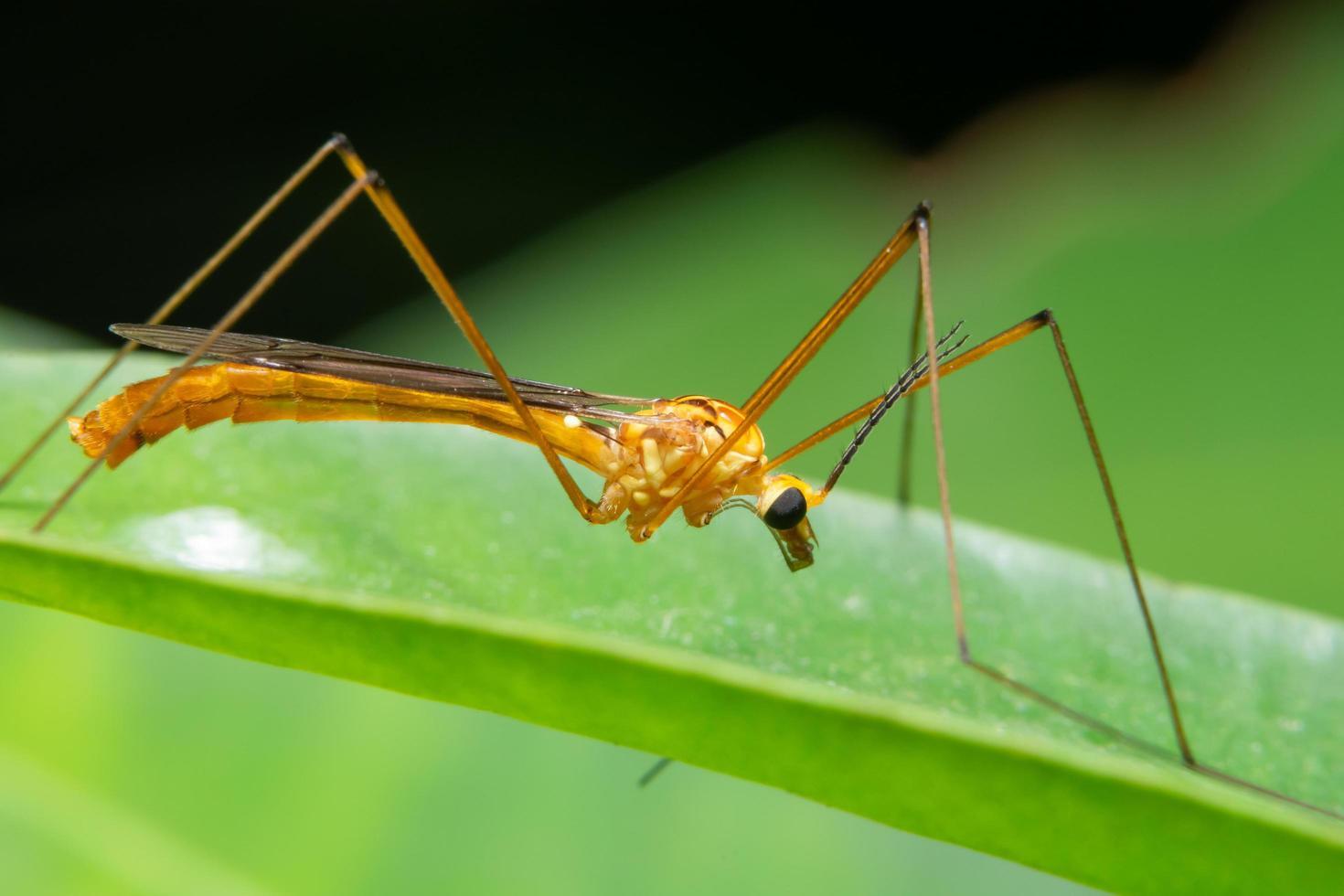 insecto en una hoja, primer plano foto